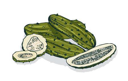 Elegante Detailzeichnung von ganzen und geschnittenen Gurken oder eingelegten Gurken. Mariniertes Gemüse, vegetarischer Snack oder vegane Vorspeise lokalisiert auf weißem Hintergrund. Hand gezeichnete realistische Vektorillustration. Vektorgrafik