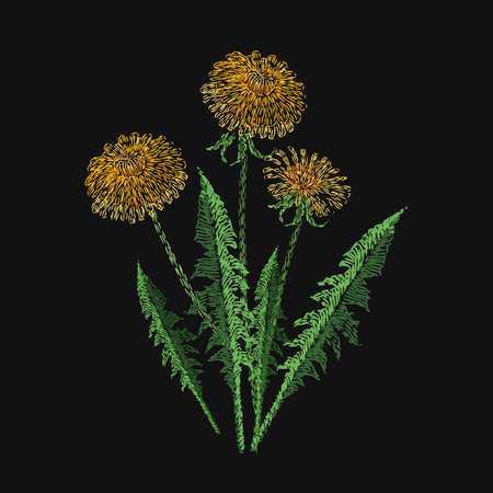 Blooming dandelion flower embroidered with stitches on black background. Embroidery design with beautiful wild meadow flowering herb. Gorgeous needlework, handicraft. Colorful vector illustration.
