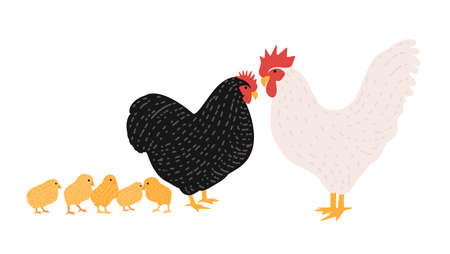Family of cock and chicken. Collection of rooster, hen and brood of chicks isolated on white background. Flock of domestic poultry or farm birds. Cartoon colorful hand drawn vector illustration.