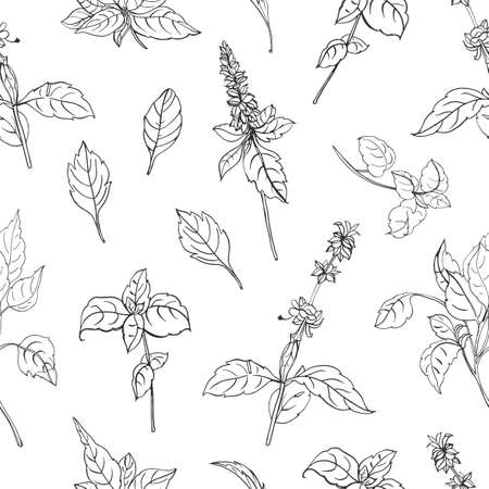Modello senza cuciture naturale con foglie di basilico e fiori disegnati a mano con linee di contorno nere su sfondo bianco. Fondale con erbe aromatiche, pianta coltivata per uso culinario. Illustrazione vettoriale Vettoriali