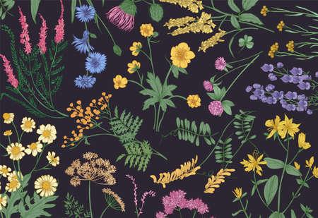 Botaniczne poziome tło z kwitnącymi dzikimi kwiatami, letnimi ziołami kwitnącymi łąkami i wspaniałymi roślinami zielnymi na czarnym tle. Naturalne realistyczne kwiatowy ręcznie rysowane ilustracji wektorowych