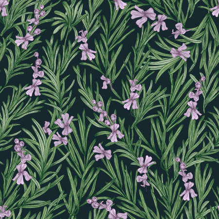 Floral seamless pattern with blooming rosemary on black background. Backdrop with wild aromatic herb. Botanical vector illustration in antique style for wrapping paper, textile print, wallpaper