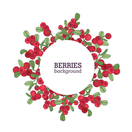 Round natural backdrop or wreath made of lingonberries hand drawn on white background. Decorative frame consisted of red boreal berries and leaves. Elegant colorful realistic vector illustration