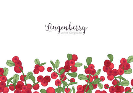Horizontal backdrop decorated with lingonberries hand drawn at bottom edge on white background. Natural backdrop with border made of arctic berries and leaves. Botanical vector illustration