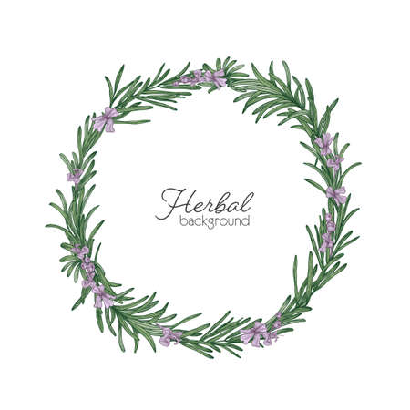 Round natural backdrop or wreath made of rosemary hand drawn on white background. Decorative frame consisted of beautiful aromatic culinary herb. Colorful botanical realistic vector illustration Vettoriali
