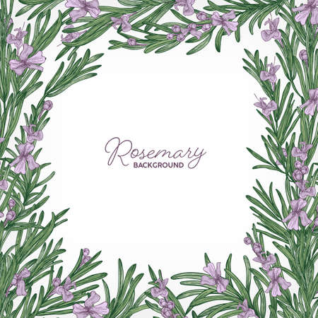 Square backdrop with frame made of rosemary and place for text. Elegant border consisted of gorgeous fragrant wild blooming herb or herbaceous plant. Colorful natural realistic vector illustration