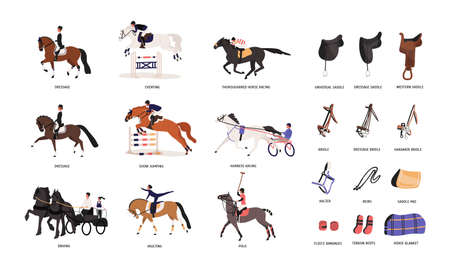 Collection of various horse gaits and tools for horseback riding or equestrianism isolated on white background. Beautiful competitive sport. Colorful vector illustration in flat cartoon style
