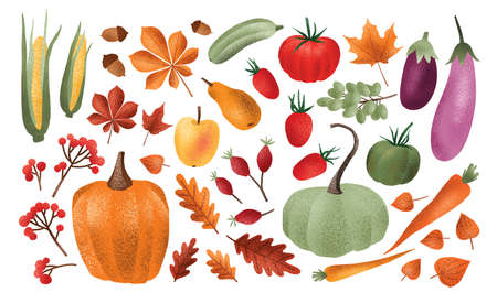 Autumn harvest set. Collection of ripe delicious vegetables, fresh fruits, berries, fallen leaves, acorns isolated on white background. Colorful elegant seasonal vector illustration in modern style