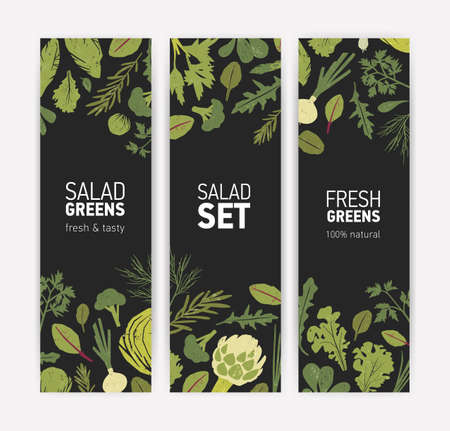 Bundle of vertical banner templates with fresh tasty salad leaves and spice herbs on black background. Vector illustration for natural vegetarian healthy food products advertisement, promotion