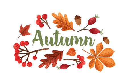 Autumn lettering handwritten with beautiful cursive calligraphic font decorated with fallen tree leaves, acorns, berries. Seasonal composition isolated on white background. Vector illustration.