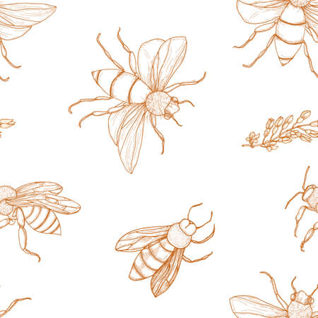 Elegant seamless pattern with honey bees hand drawn with contour lines on white background. Apiculture or beekeeping backdrop. Monochrome vector illustration in antique engraving style for wallpaper