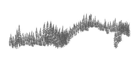 Evergreen forest or woodland landscape with silhouettes of coniferous trees growing on hills. Hand drawn natural monochrome decorative element isolated on white background. Vector illustration Vector Illustratie