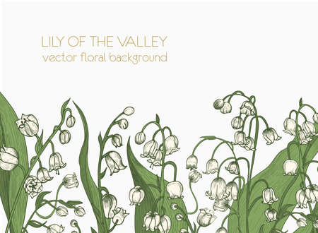 Beautiful horizontal floral backdrop decorated with lily of the valley blooming flowers growing at bottom edge on white background. Elegant realistic hand drawn botanical vector illustration