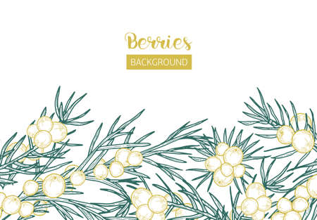 Elegant background with juniper sprigs and berries hand drawn with contour lines on white background. Backdrop decorated by coniferous plant. Natural monochrome realistic vector illustration Stock Illustratie