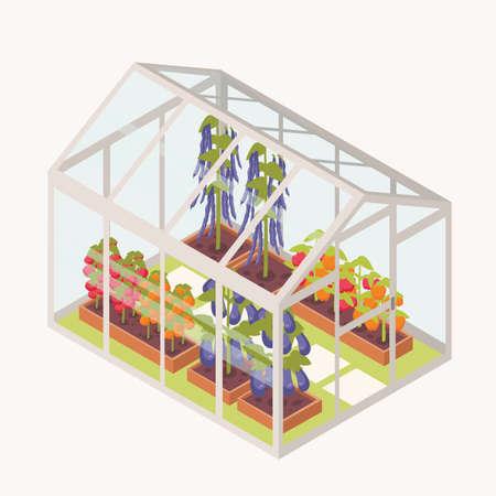 Gemüse, das in Kisten mit Erde innerhalb des Glasgewächshauses wächst. Isometrisches Gewächshaus mit Gartenbeeten für den Pflanzenbau. Landwirtschaftliche Struktur lokalisiert auf weißem Hintergrund. Vektorillustration Vektorgrafik