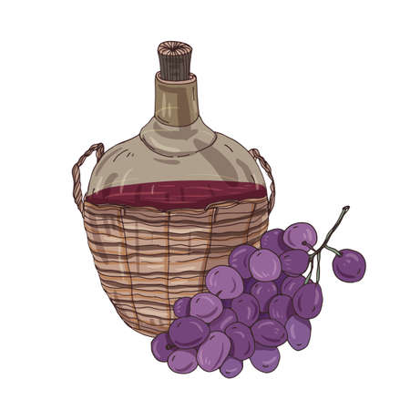 National Georgian red wine in bottle in straw basket and bunch of grapes. Delicious traditional Caucasian alcoholic drink, tasty alcohol beverage. Colorful realistic hand drawn vector illustration.