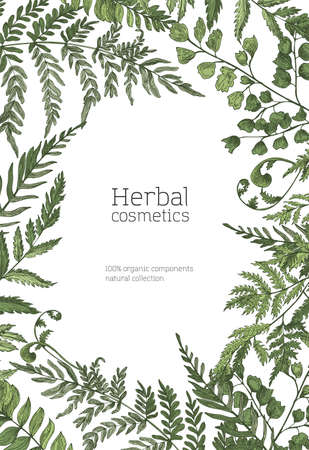 Flyer or poster template with frame made of forest ferns, wild herbs, green herbaceous plants on white background. Hand drawn realistic vector illustration for natural organic cosmetics advertisement