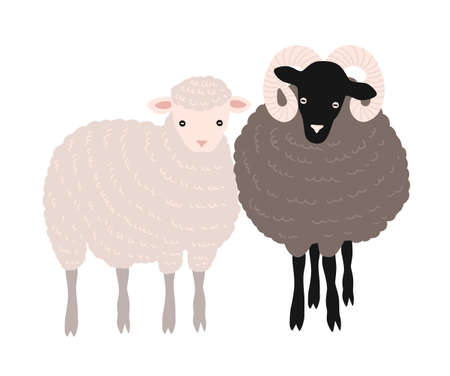 Pair of sheep and ram standing together. Adorable barnyard domestic ruminant animals or farm livestock isolated on white background. Childish colored vector illustration in flat cartoon style. Stock Photo