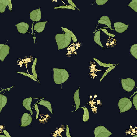 Floral seamless pattern with linden leaves and inflorescences on black background. Backdrop with medicinal plant. Colored hand drawn vector illustration in vintage style for textile print, wallpaper