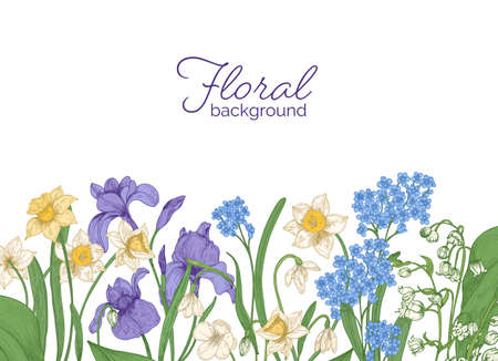 Floral horizontal backdrop decorated with spring meadow and woodland blooming flowers growing at bottom edge on white background. Seasonal hand drawn realistic colorful natural vector illustration