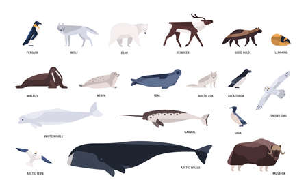 Collection of cute polar animals, birds, marine mammals inhabiting Arctic and Antarctica isolated on white background. Polar fauna set. Bright colored vector illustration in flat cartoon style. Stock Photo