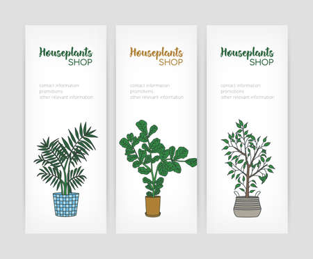 Set of vertical banner templates with fiddle leaf fig and weeping fig growing in pots and place for text. Vector illustration for houseplant store or plant cultivation shop advertisement, promotion