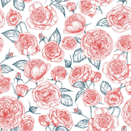 Elegant seamless pattern with blooming Provence roses hand drawn with contour lines on white background. Backdrop with beautiful garden flowers. Natural realistic vector illustration in vintage style.