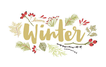 Winter lettering handwritten with cursive calligraphic font and decorated by coniferous tree branches and berries. Decorative seasonal composition. Flat colorful natural vector illustration Ilustração