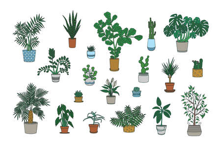 Set of decorative houseplants growing in planters isolated on white background. Bundle of trendy potted plants. Collection of gorgeous natural home decorations. Colorful vector illustration