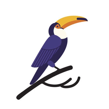 Toco toucan isolated on white background. Gorgeous exotic tropical bird with large bright colored beak or bill sitting on branch. Wild fauna of America. Vector illustration in flat cartoon style.