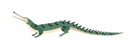 Fish-eating crocodile or gharial isolated on white background. Dangerous exotic predatory reptile. Wild carnivorous animal. Endangered species. Colorful vector illustration in flat cartoon style. Stock Photo