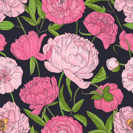Natural seamless pattern with blooming pink peonies on black background. Backdrop with blossoming garden flowers. Botanical vector illustration in antique style for textile print, wrapping paper