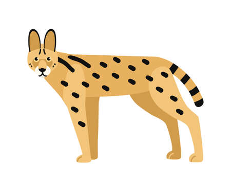 Serval isolated on white background. Wild African cat with slender body and spotted coat. Beautiful exotic predatory animal. Gorgeous carnivorous mammal. Vector illustration in flat cartoon style