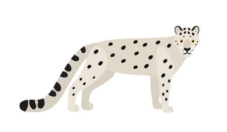 Snow leopard or ounce isolated on white background. Gorgeous Asian exotic carnivorous animal with spotted coat. Graceful large wild cat or felid. Colored vector illustration in flat cartoon style