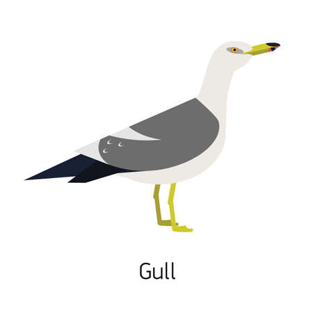 Herring gull or seagull isolated on white background. Gorgeous marine bird or seabird. Beautiful wild avian species. Winged creature. Modern vector illustration in trendy flat geometric style.