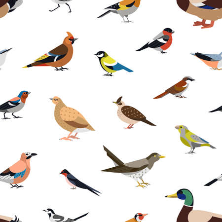 Seamless pattern with wild forest birds on white background. Backdrop with avians. Ornithological vector illustration in modern geometric flat style for wrapping paper, fabric print, wallpaper