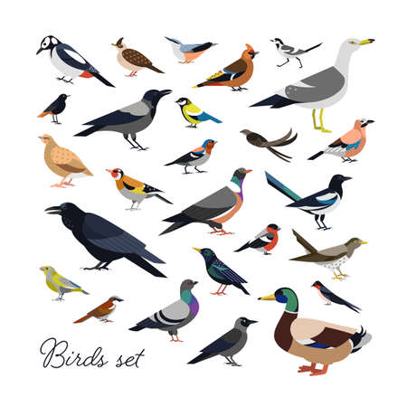 Bundle of city and wild forest birds drawn in modern geometric flat style, side view. Set of colorful cartoon avians or birdies isolated on white background. Trendy ornithological vector illustration