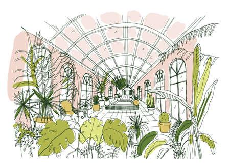 Elegante tekening van interieur van paviljoen of kas vol tropische planten met weelderig gebladerte. Schets uit de vrije hand van botanische tuin met exotische bomen die in potten groeien. Hand getekend vectorillustratie.
