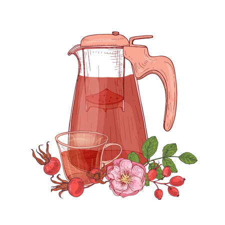 Elegant drawing of glass transparent pitcher with strainer, cup of tea, dog rose branch with flowers and leaves isolated on white background. Tasty beverage. Vector illustration in antique style Stock Illustratie