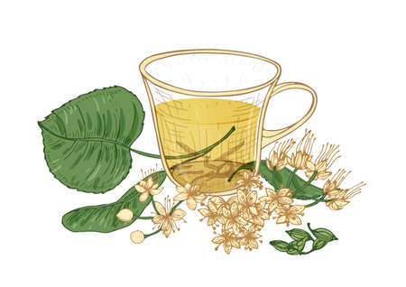 Elegant drawing of tea in glass cup, linden flowers, buds and leaves isolated on white background. Tasty natural hot drink, aromatic beverage. Colorful hand drawn vector illustration in retro style Illustration
