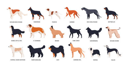 Bundle of funny cute dogs of different breeds isolated on white background. Set of purebred pets or domestic animals of various types. Side view. Colored vector illustration in flat cartoon style