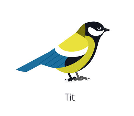 Great tit isolated on white background. Cute funny small insectivorous bird. Gorgeous wild avian species. Adorable little birdie. Modern vector illustration in trendy flat geometric style