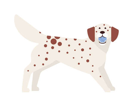 Frisky spotted dog playing with ball. Playful adorable purebred doggy or puppy isolated on white background. Funny cute domestic animal or pet. Colorful vector illustration in flat cartoon style