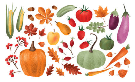 Autumn harvest set. Collection of ripe delicious vegetables, fresh fruits, berries, fallen leaves, acorns isolated on white background. Colorful elegant seasonal vector illustration in modern style Vektorové ilustrace
