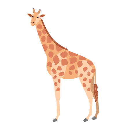 Cute giraffe isolated on white background. Gorgeous herbivorous exotic African animal. Stunning wild species of Africa, fauna of savannah. Colorful vector illustration in flat cartoon style