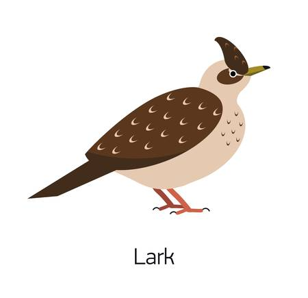 Lark isolated on white background. Beautiful forest passerine bird, adorable woodland songbird. Funny birdie. Avian species. Modern colorful vector illustration in trendy flat geometric style