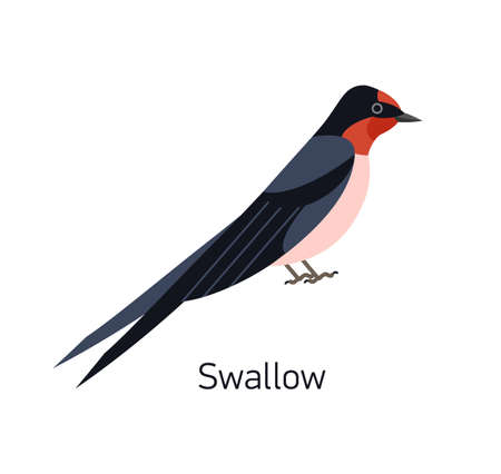 Swallow or Martin isolated on white background. Adorable small fast insectivorous bird. Gorgeous wild avian species. Cute little birdie. Modern vector illustration in trendy flat geometric style