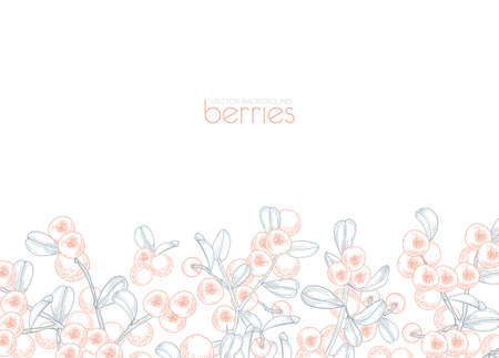 Elegant banner template decorated with lingonberries hand drawn with contour lines on white background. Background with wild boreal berries and leaves. Monochrome vector illustration in vintage style
