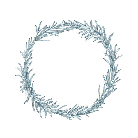 Circular decoration or wreath made of rosemary hand drawn with contour lines on white background. Decorative frame consisted of aromatic culinary herb or condiment. Botanical vector illustration