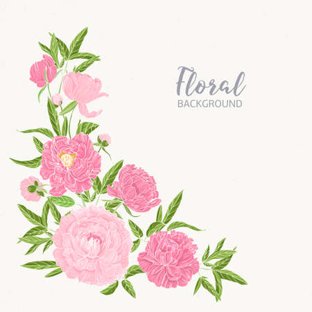 Square floral backdrop decorated by blooming pink peonies at left bottom corner. Gorgeous hand drawn flowers on light background. Colorful realistic botanical vector illustration in vintage style